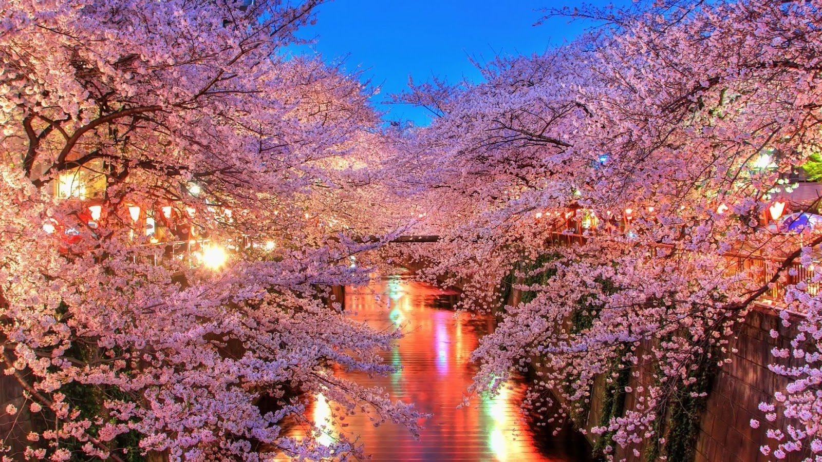 Galleri Bunga Sakura 998antirohaeti